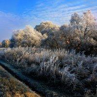 Утро чудесное! :: Эркин Ташматов