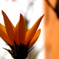 Красивый цветок. Автор Саша. :: Фотогруппа Весна.