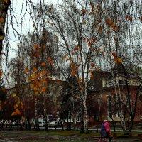 Осень-банкрот.Последнее золото. :: Владимир Михайлович Дадочкин