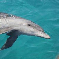 дельфин :: vasya-starik Старик