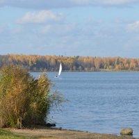 Озеро Сенеж. :: Oleg4618 Шутченко