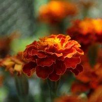 Огненная красота :: Анастасия Казакова