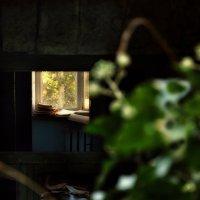 Здесь, вероятно, жил поэт... :: Ирина Данилова
