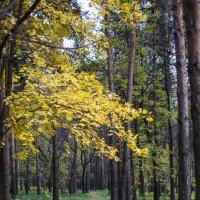 Красавица осень :: Андрей Чиченин