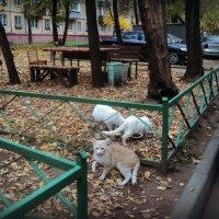 Осенний марафон :: Ольга Кривых