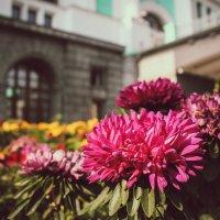 Цветы и город :: Мария Вергузова