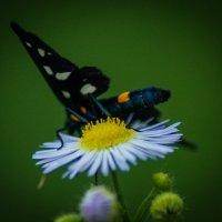 Бабочка :: Андрей Воробьев