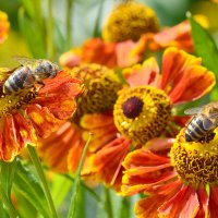 Пчелы 2 :: Viacheslav