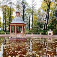 Осенний пруд. :: Марина Харченкова