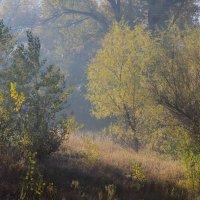 Утро в лесу :: Viktor Eremenko