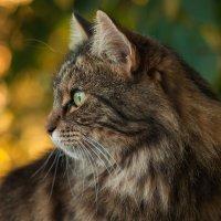 Моя кошка-красавица :: Jenya Kovalchuk