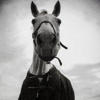 Конь ,в пальто !)) :: Маry ...