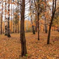 Воздух пахнет осенними листьями :: Татьяна Ломтева