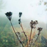 туман :: Любовь Нефёдова