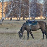 Я с утра запряг коня, проскакал на нём полдня... :: Maxxx©