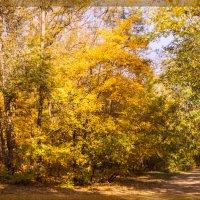 Осень в ботанике :: Сергей Шруба