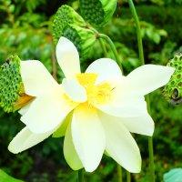 цветок :: Юля Чарановская