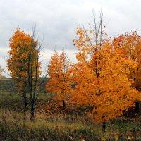 Рыжая осень.... :: Маргарита ( Марта ) Дрожжина