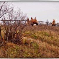 пейзаж с верблюдами :: Natalia Mihailova