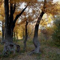 В осеннем лесу :: Dr. Olver  ( ОлегЪ )
