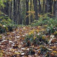Осень в лесу :: Vladimir Lisunov