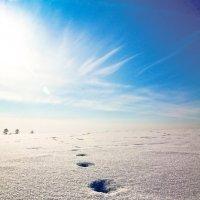 Путь к солнцу :: Иван Сидоров