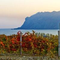 Вино уж зреет.. :: Геннадий Валеев