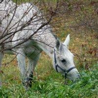последняя трава :: татьяна горбунова
