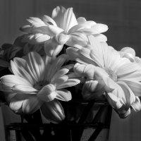 Цветы :: Алексей Сибирцев