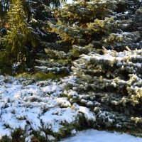Снег в Омске :: Savayr