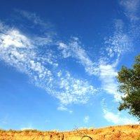 Ах это небо :: Анастасия Казакова