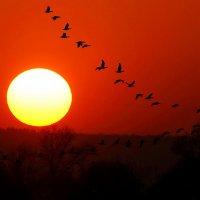 Досвиданья птицы!Путь счастливый! :: Petr Vinogradov
