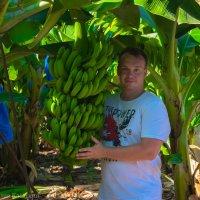 Бананчики) :: Kasatkin Vladislav
