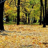Золотые ковры постелив... :: Milocs Морозова Людмила