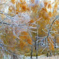 после ледяного дождя. :: Михаил Николаев