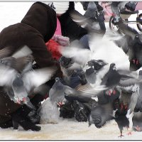 Взлёт голубей... :: Александр