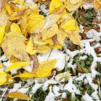 Трава под первым снегом :: Андрей Мердишев