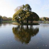 Царицынский пруд,островок :: Людмила Монахова