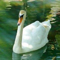 Озеро в Казанском зоопарке :: Наиля