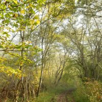 Осенний лес :: Lyudmila Petryashina
