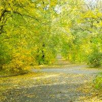 желто-зеленые краски... :: Maryna Krywa