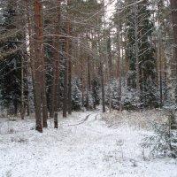 седой зимы угрозы.... :: Евгения Куприянова
