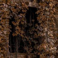 Осенние гирлянды :: Николай Глазьев