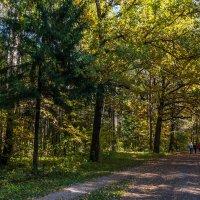 Осенний лес :: Андрей Гриничев