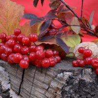 Осень наступила... :: Юлия Москаленко