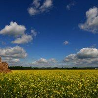 желтое поле :: Nina sofronova