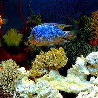 Подводный мир :: Татьяна Черняева