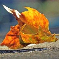 Прыгающая осень :: Alexander Andronik