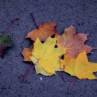Золотая осень :: Анна Здвижкова