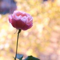 Последний срезанный цветок :: Тая Лемур